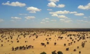 NASA, árboles, desierto del Sahara, desierto, científicos, hábitat