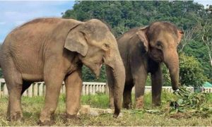 Elefantes, Tailandia, reserva, zoológico,
