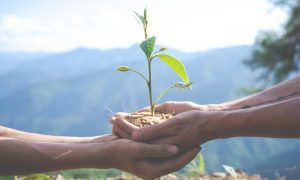 cambio climático, cuidado del ambiente, Protección del Ambiente, ayuntamiento de Tijuana, Dirección de Protección al Ambiente,