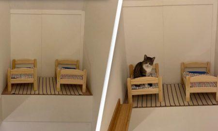 camas, gatos, mascotas, cuartos, viral