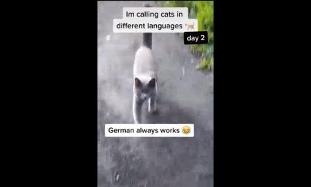 Gatos, llamado, idiomas, alemán, video viral