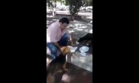 Hombre, comida, perros, operativo, coordenado, video viral