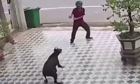 Hombre, perros, poses, Karate Kid, salva, ahuyenta, video viral