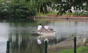 lago, cocodrilo, hombre, asesinato