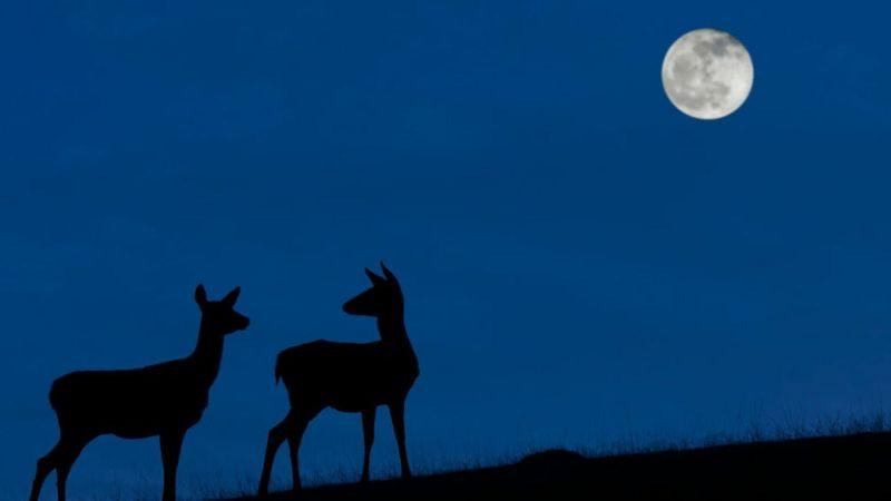 Luna azul, octubre, satélite, fenómeno natural, Luna llena, espacio