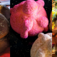 pan de muertos, Día de Muertos, noviembre, celebración, cocina tradicional