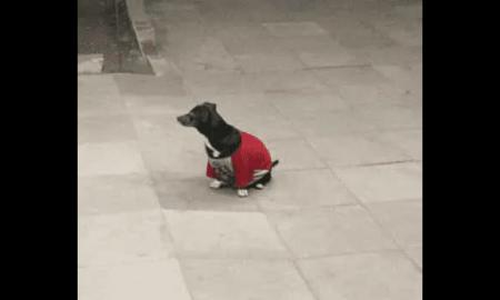perrita, ambulancia, dueño, can, fiel, desmayo, Brasil