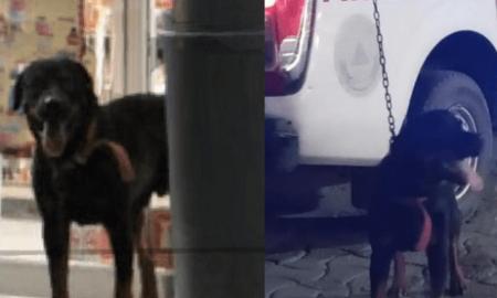 perro, secuestro, Oxxo, redes sociales, autoridades, Ciudad del Carmen