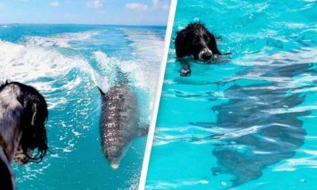perro, delfín, amigos, océano, Las Bahamas, islas, animales