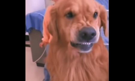 Perro, can, defiensa, niña, menor, madre, regaño