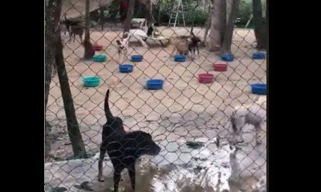 Refugio, perros, huracán Delta, Ricardo Pimentel, 300 perros