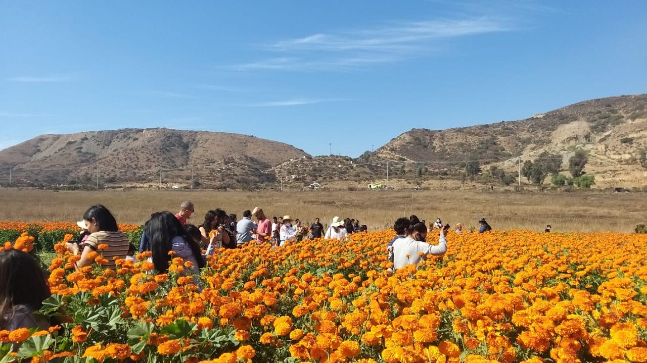 flor de cempasúchil, venta de flores, día de muertos, viral,