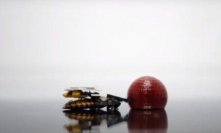 cucaracha, cíborg, limpieza, Japón, ciencia, tecnología, animal