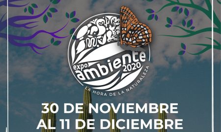 expo, ambiente, sest, talleres