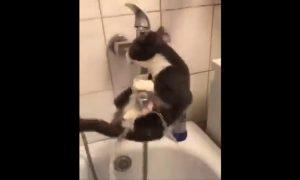 Gato, resbala, agua, llave, video viral
