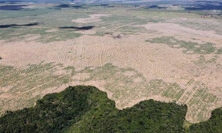 Jair Bolsonaro, madera ilegal, Brasil
