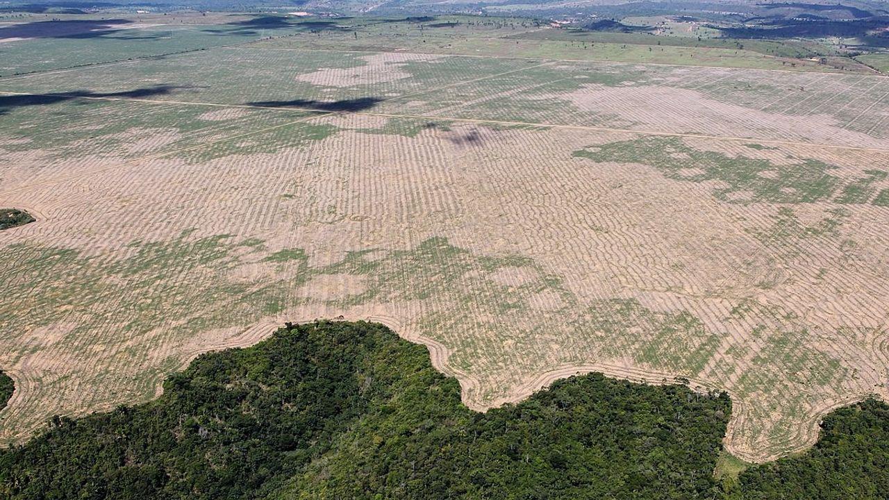 Jair Bolsonaro madera ilegal Brasil