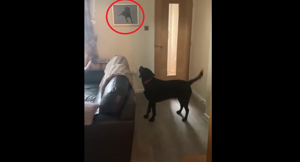 video, perro, video viral, reacción, mascota