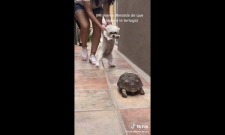 Perro, tortuga, ladra, video viral