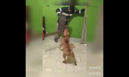 Perro, machete, hocico, joven, patineta, video viral