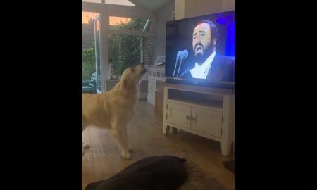 Perro, ópera, música, televisión, Luciano Pavarotti, video viral