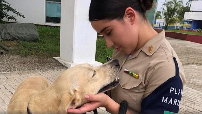 Perro, rescate, Tabasco, Marina, adopción
