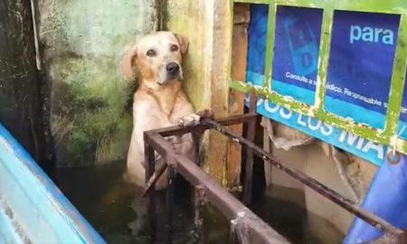 Perro, rescate, inundación, Tabasco, video viral