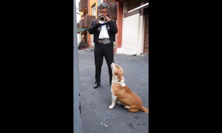 Perro, música, serenata, mariachi, video viral