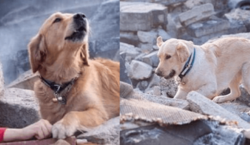 Turquía, perrito, familia, desastre, terremoto, derrumbes