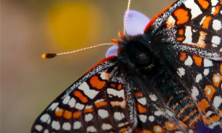 mariposa, quino, expo ambiente