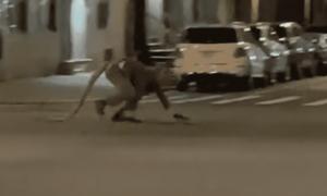 rata, Nueva York, disfraz, hombre, video viral