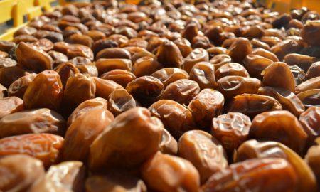 palma datilera, producción, Mexicali