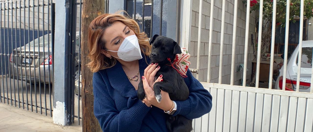 Adoptar es Amar, adopción de mascotas, Mexicali