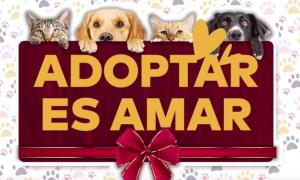 adopción, Ayuntamiento de Mexicali, control animal