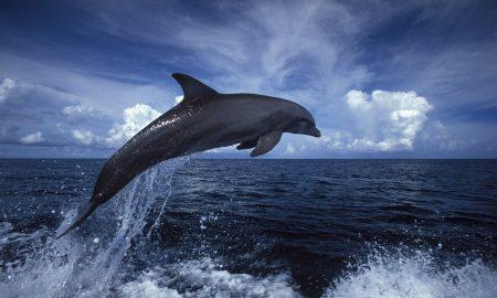 enfermedad de agua dulce, delfines, cambio climático