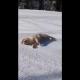 perro, desliza, nieve, video viral