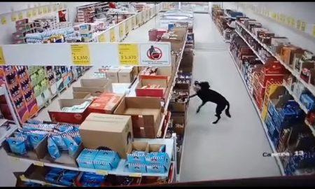 Perro, ladrón, tienda, D1, video, viral