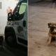 perro, ambulancia, duelo, paramédico, video viral,